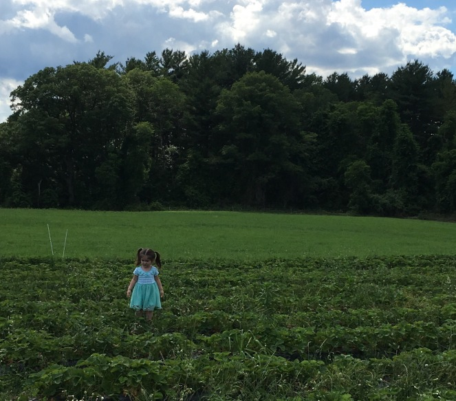 Summer activities for kids - strawberry picking.